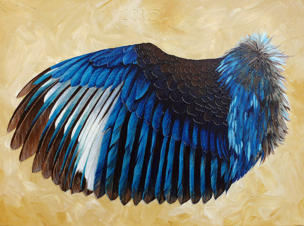 Wing Study: Kingfisher