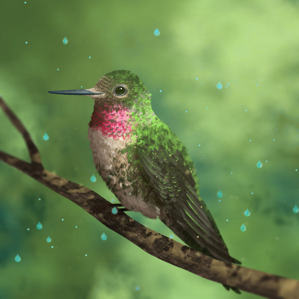 3 - Hummingbird's Tear