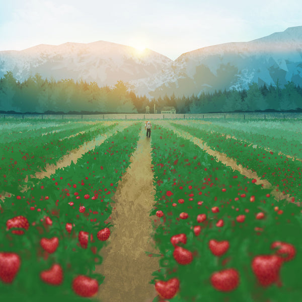 Strawberry Harvest by Kajsa