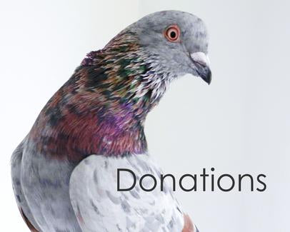 donate to Olive's Place Dove & Pigeon Sanctuary