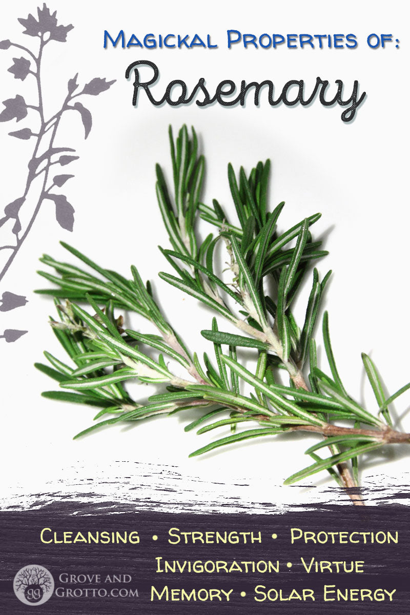 Magickal properties of Rosemary – Grove and Grotto