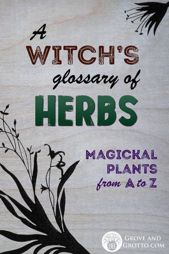 A Witch's glossary of herbs