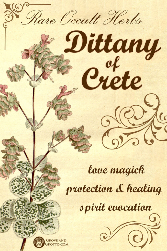 Rare occult herbs: Dittany of Crete – Grove and Grotto