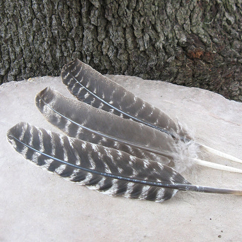 Turkey wing feathers for smudging