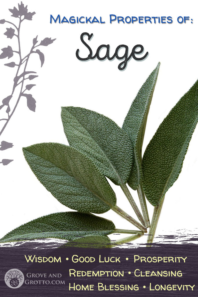 Magickal properties of Sage – Grove and Grotto
