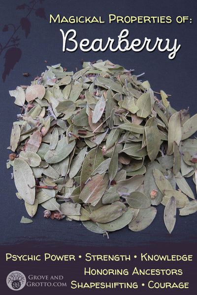 Magickal properties of Bearberry