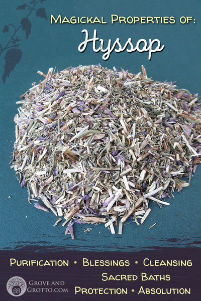 Magickal properties of Hyssop