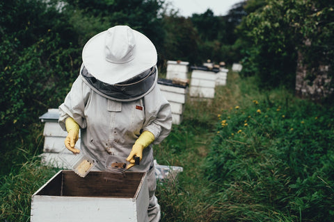 Beekeeper checking on hives