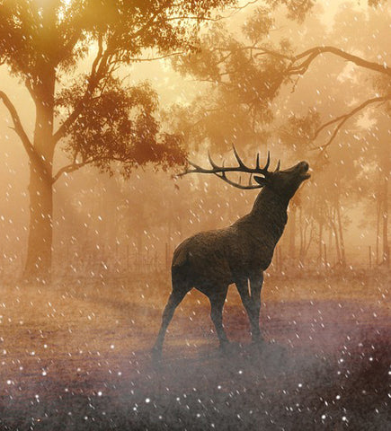A deer in the autumn
