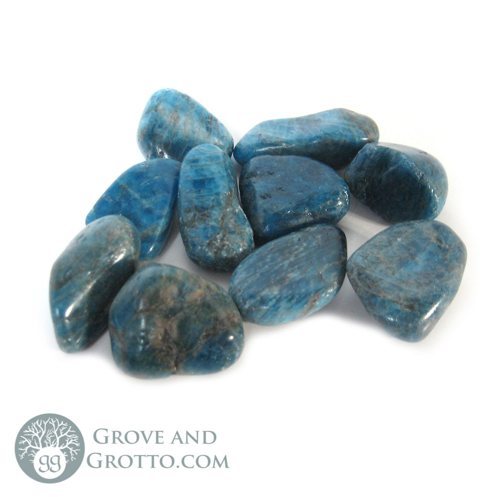 Apatite Small (1 Piece) - Grove and Grotto