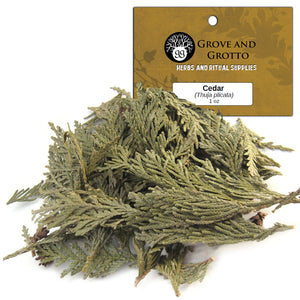 Cedar Tips (1 oz) - Grove and Grotto