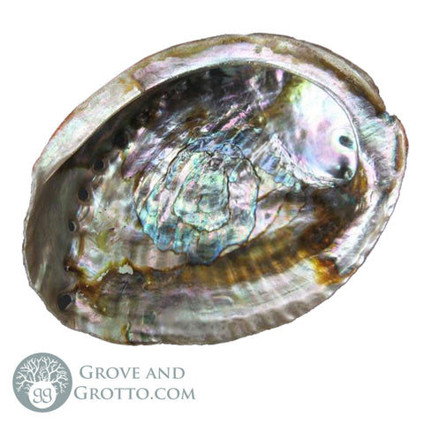 "Large Abalone Shell (5-6"")"
