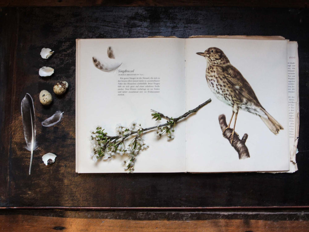 Catherine Hills Jewellery song thrush sketchbook