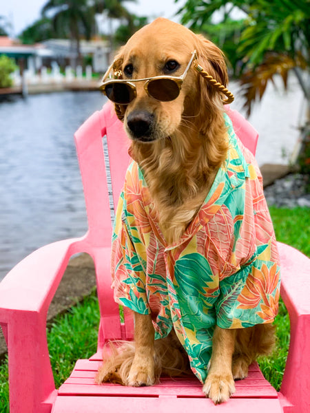 kenny_flowers_shirt_for_dogs_sunglasses