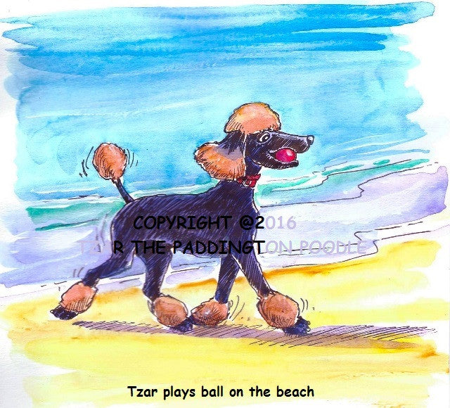 PRINT - from the Crocodile Encounter Collection - Tzar plays ball on the beach