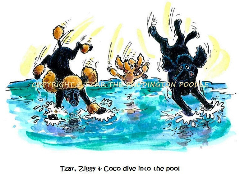 PRINT - from the Crocodile Encounter Collection - Tzar, Ziggy and Coco dive into the pool