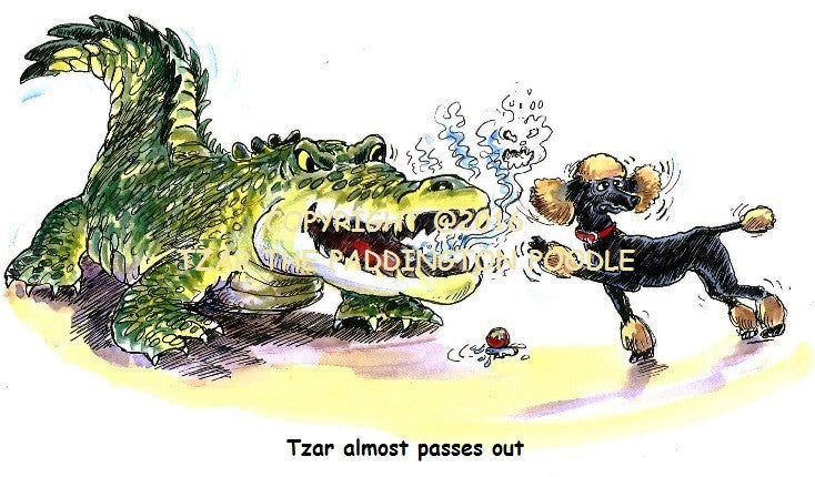 PRINT - from the Crocodile Encounter Collection - Tzar almost passes out