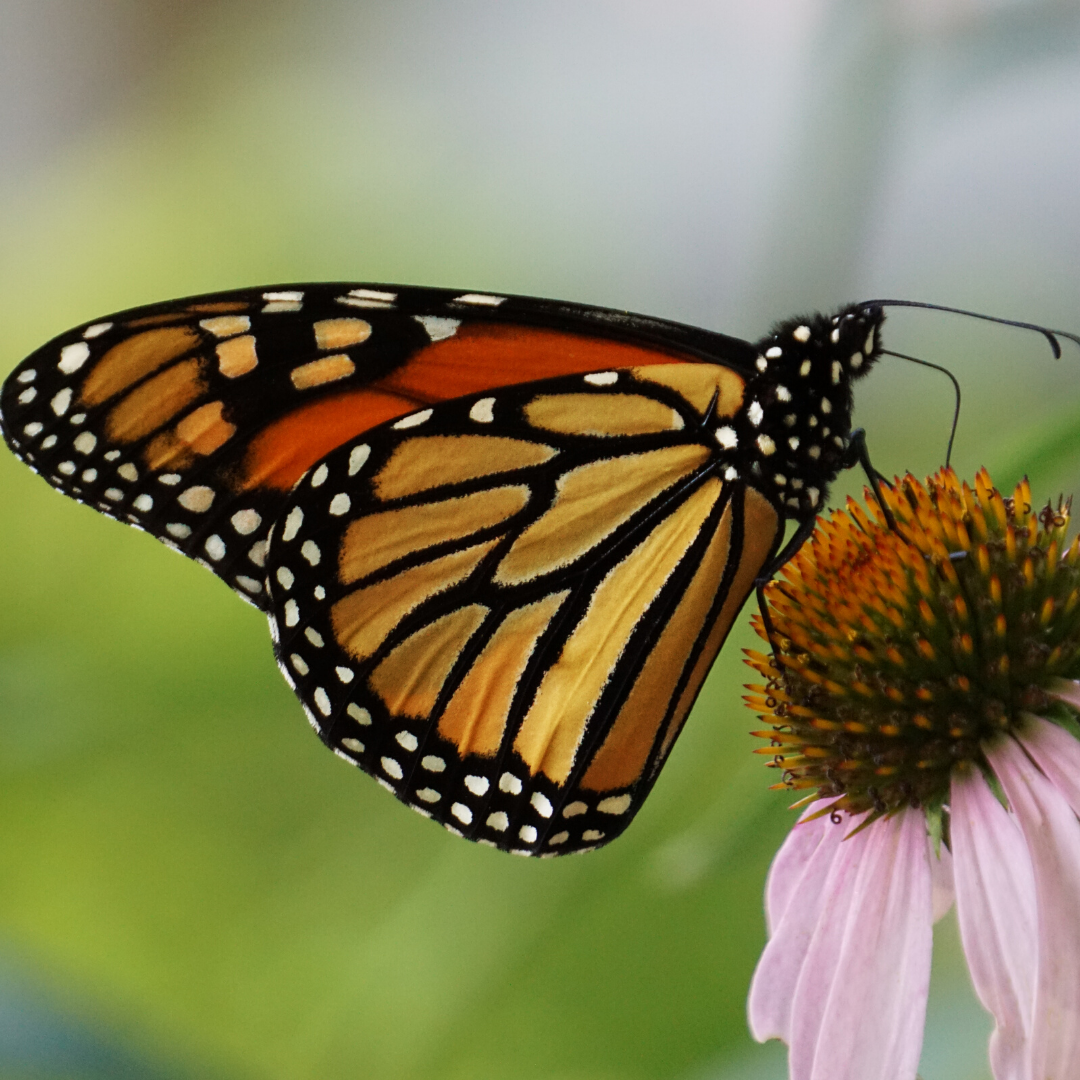 Tips to make your garden more pollinator friendly