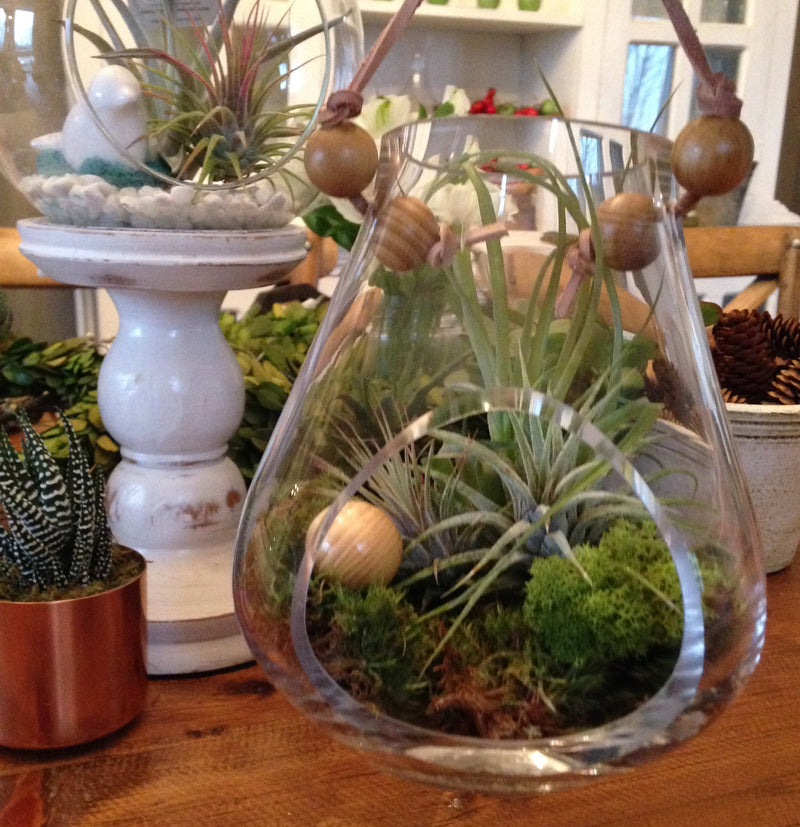 WORKSHOP - Discover Air Plants