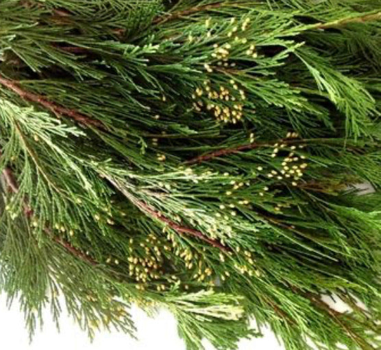 Fresh Winter Greens - Incense Cedar