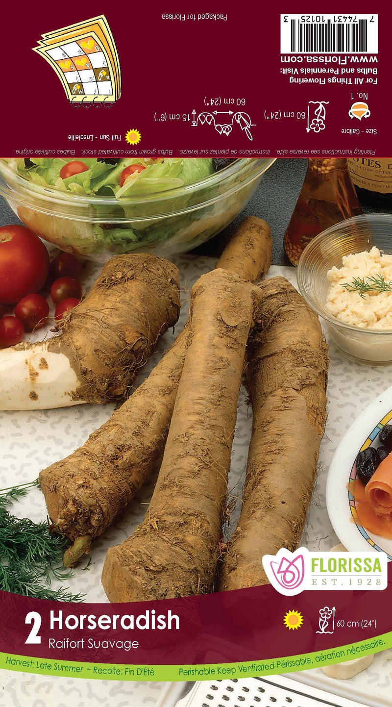 Horseradish (2/package) - bare-root