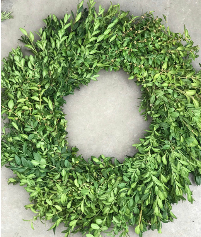 Wreath - Boxwood 20""