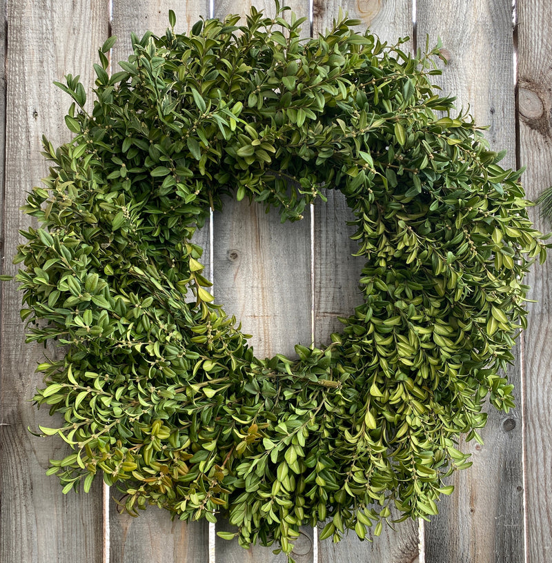 Wreath - Boxwood 26""
