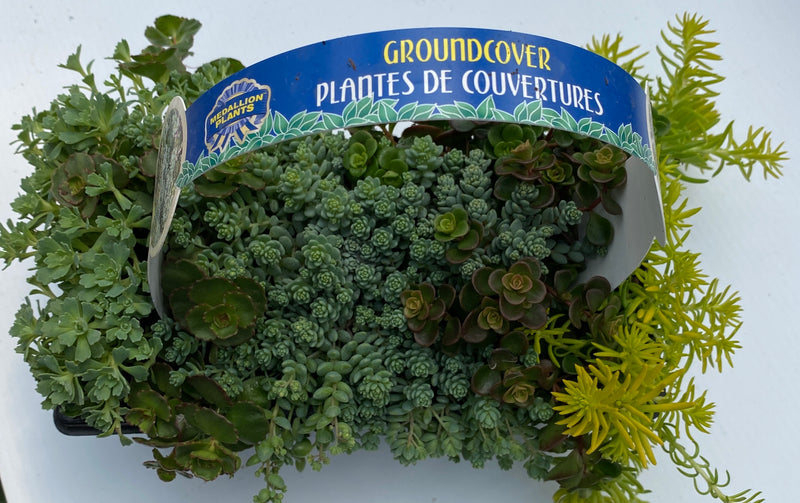 Ground covers 10 pack
