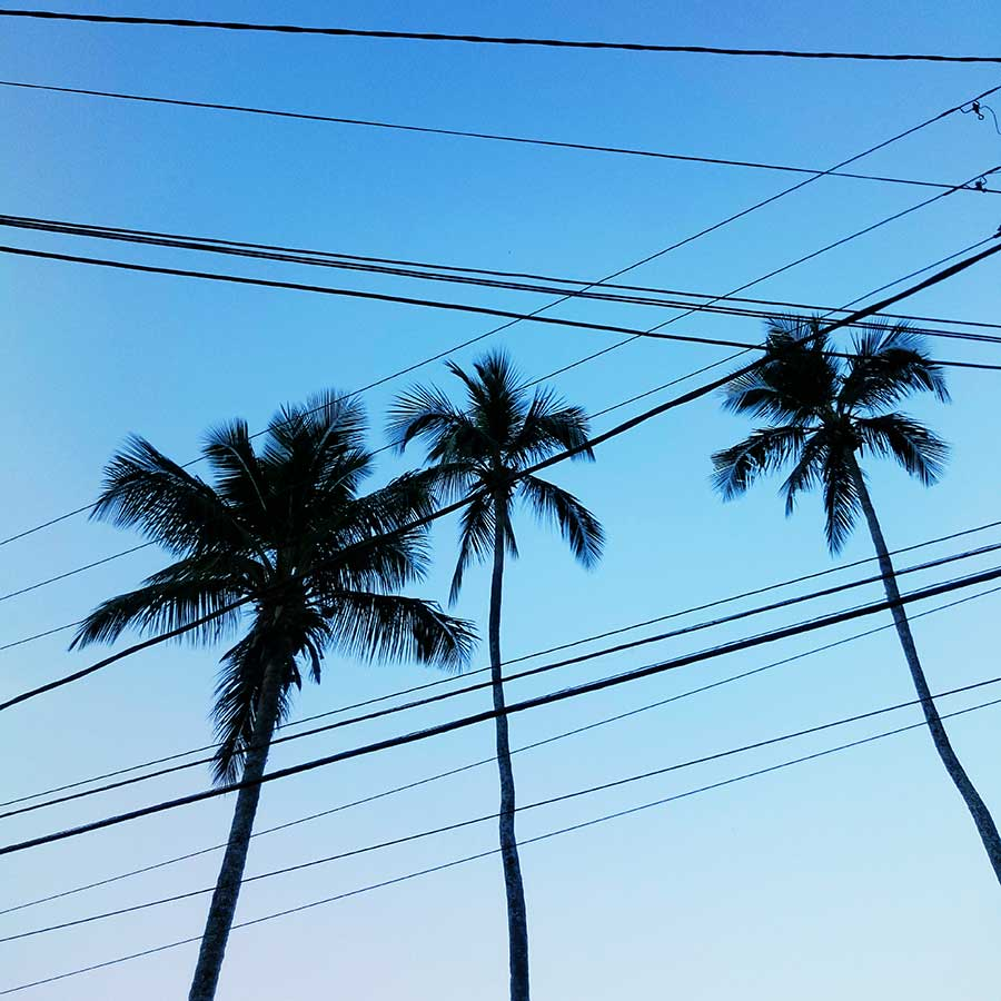 Electrical Palm Lines