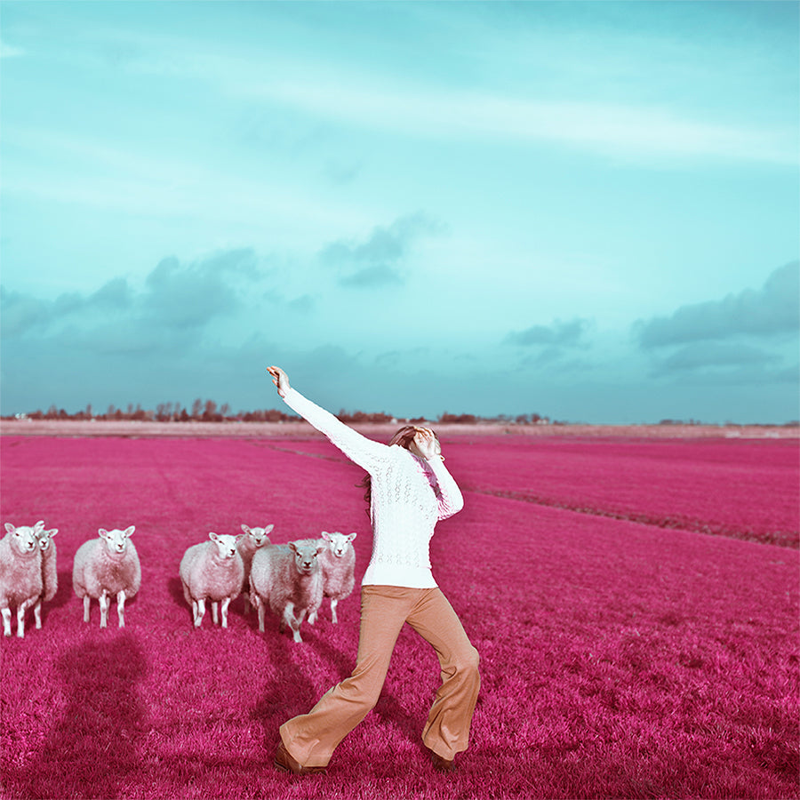 Roos Dancing With Sheeps
