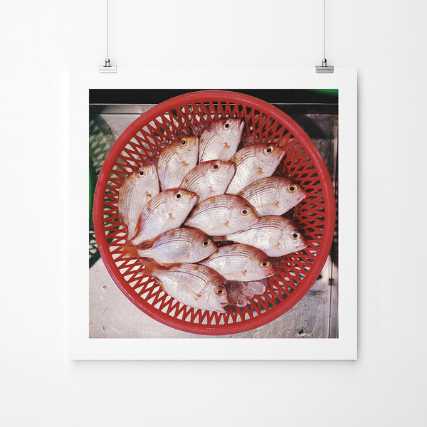 Catch of The Day - Art Prints by Post Collective - 2