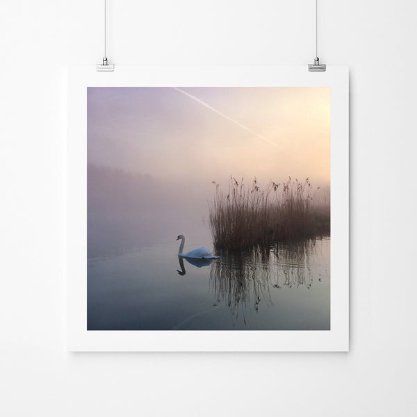 Elegance - Art Prints by Post Collective - 2