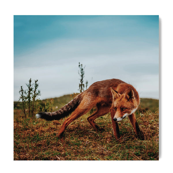 Fox - Art Prints by Post Collective - 1
