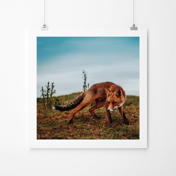 Fox - Art Prints by Post Collective - 2