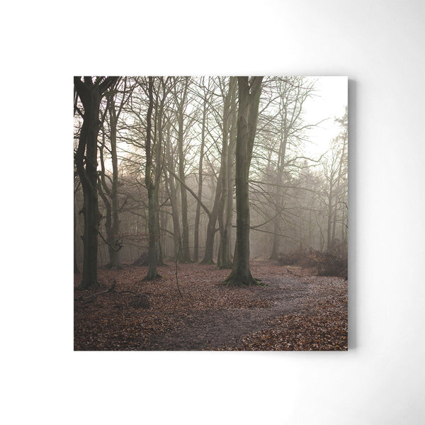 German Forest - Art Prints by Post Collective - 2