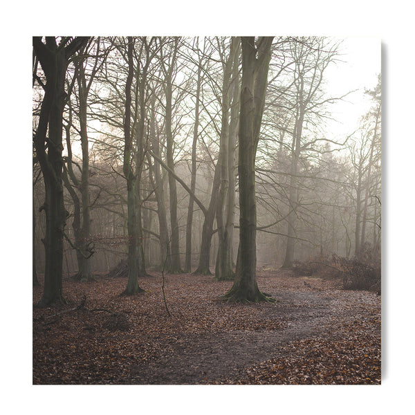 German Forest - Art Prints by Post Collective - 1