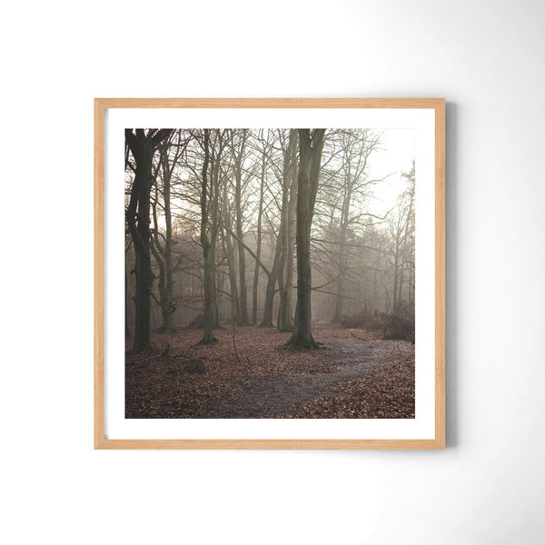 German Forest - Art Prints by Post Collective - 3