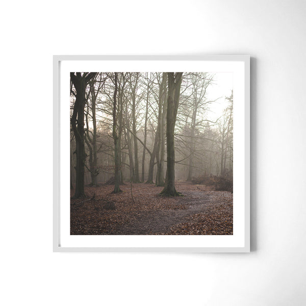 German Forest - Art Prints by Post Collective - 4