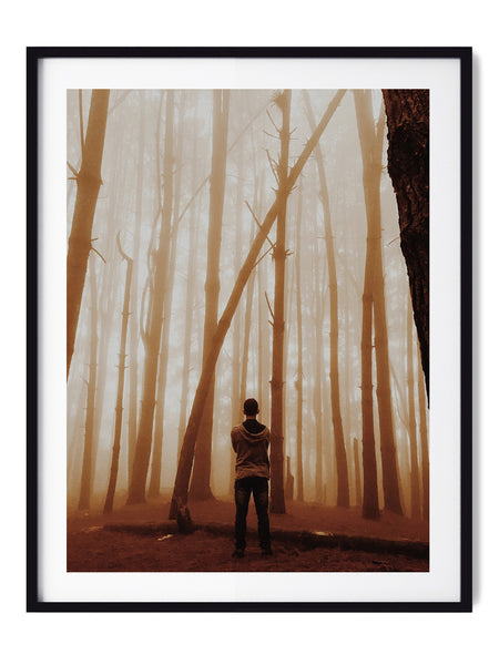 Golden Haze Forest - Art Prints by Post Collective - 1