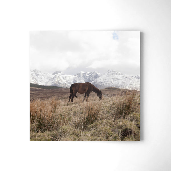 Horse In The Cuillins - Art Prints by Post Collective - 2