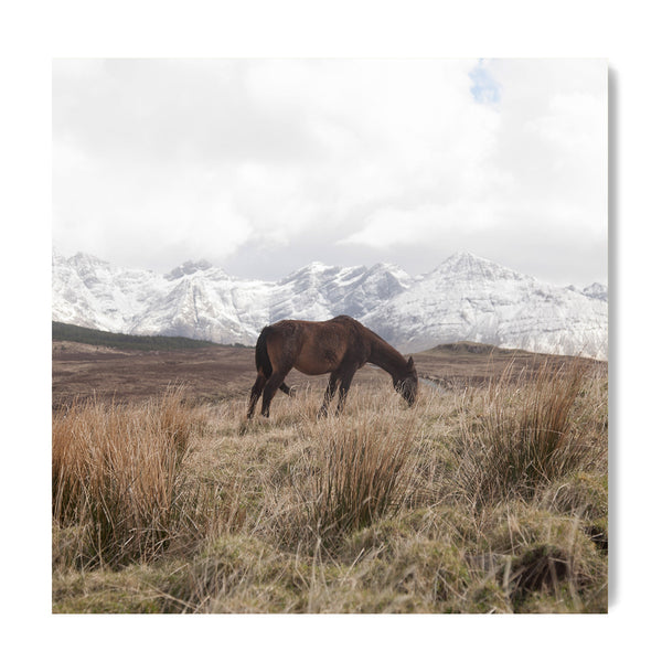 Horse In The Cuillins - Art Prints by Post Collective - 1