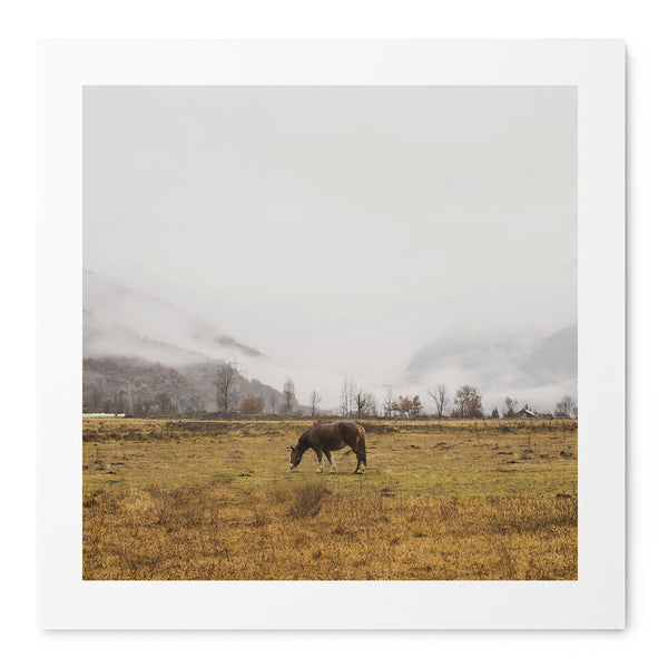 Horse - Art Prints by Post Collective - 1