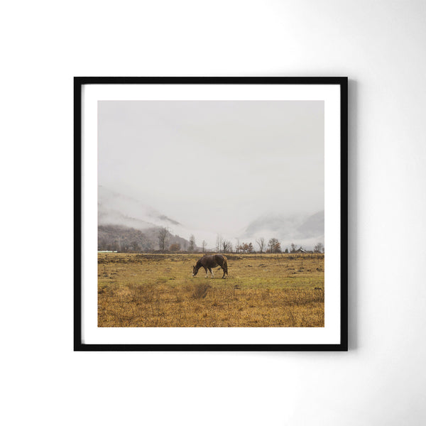 Horse - Art Prints by Post Collective - 2