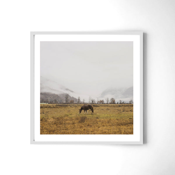 Horse - Art Prints by Post Collective - 4