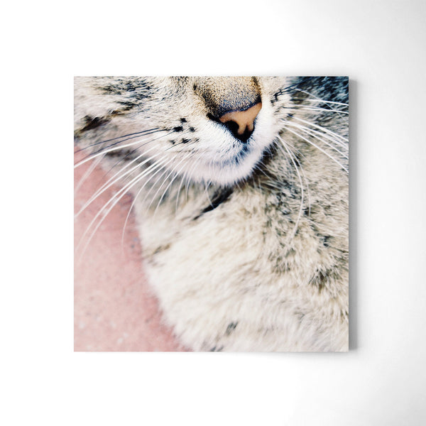 Kitty - Art Prints by Post Collective - 2