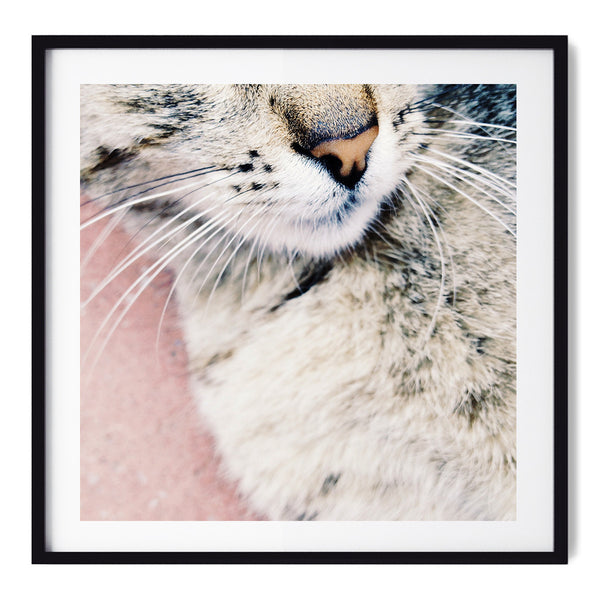 Kitty - Art Prints by Post Collective - 1