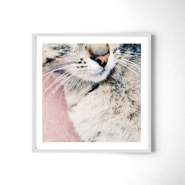Kitty - Art Prints by Post Collective - 4
