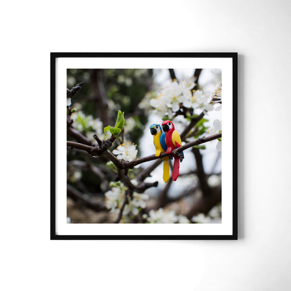 Parrots - Art Prints by Post Collective - 2