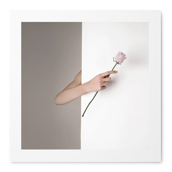 Pink Rose - Art Prints by Post Collective - 1