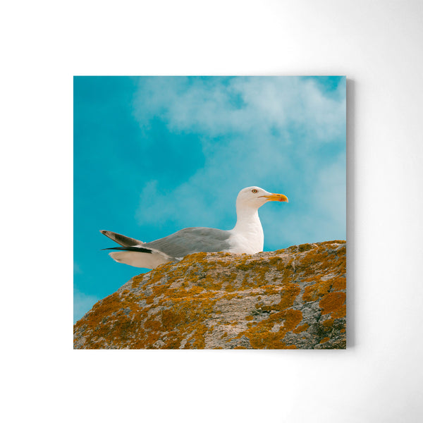 Seagull In Colours - Art Prints by Post Collective - 2